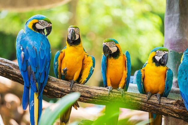 Grupo de arara colorida em galhos de árvores Foto Premium