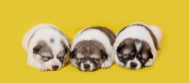 Grupo de cachorrinho dormindo em fundo amarelo Foto Premium