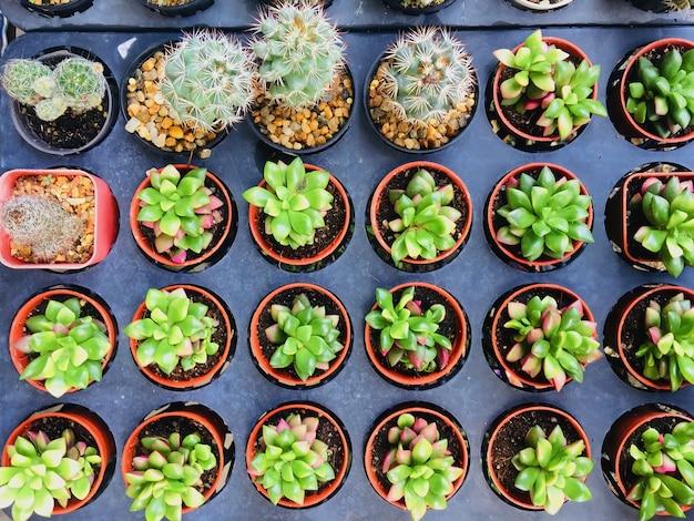 Grupo de cacto em vaso de flores Foto Premium