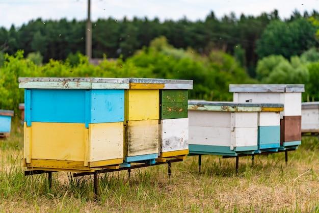 Grupo de colméias coloridas grandes e pequenas para abelhas na floresta Foto Premium