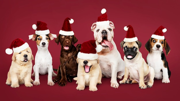 Grupo, de, filhotes cachorro, desgastar, natal, chapéus Foto gratuita