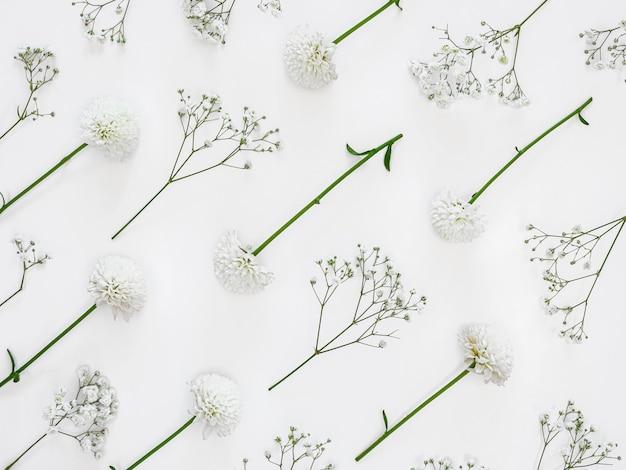 Grupo de folhas e flores de vista superior Foto Premium