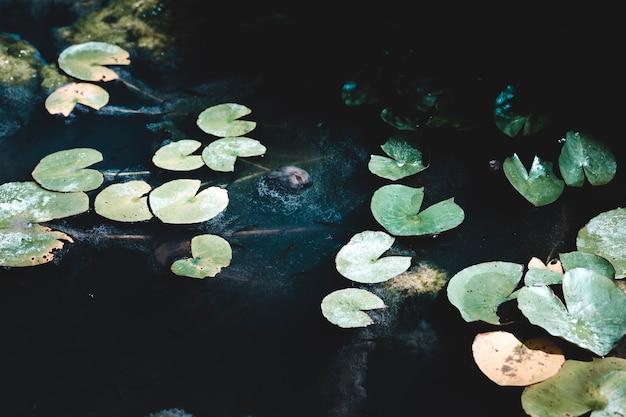 Grupo de lillies de água escura Foto gratuita