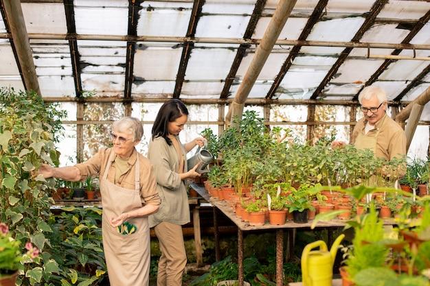 Grupo de trabalhadores da estufa sendo responsável pelo cuidado diário das plantas, regando as plantas e verificando as folhas Foto Premium