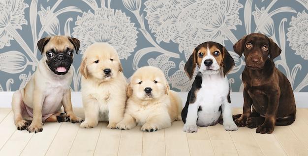 Grupo, retrato, de, cinco, adorável, filhotes cachorro Foto gratuita