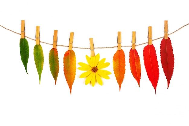 Guirlanda de folhas de outono coloridas e flor amarela em uma corda com prendedores de roupa de madeira isolado no branco Foto Premium