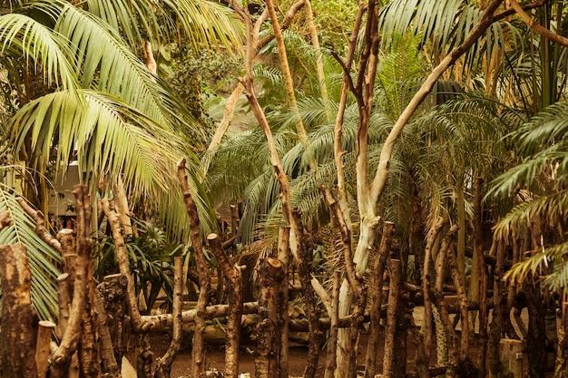 Habitat animal Foto gratuita