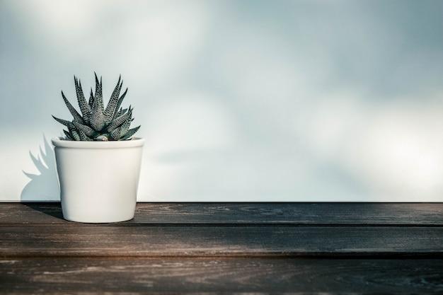 Haworthia attenuata, suculento no vaso de flores na mesa de madeira com luz solar Foto Premium