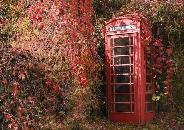 Hera vermelha começando a cobrir uma cabine telefônica na zona rural de devon Foto gratuita