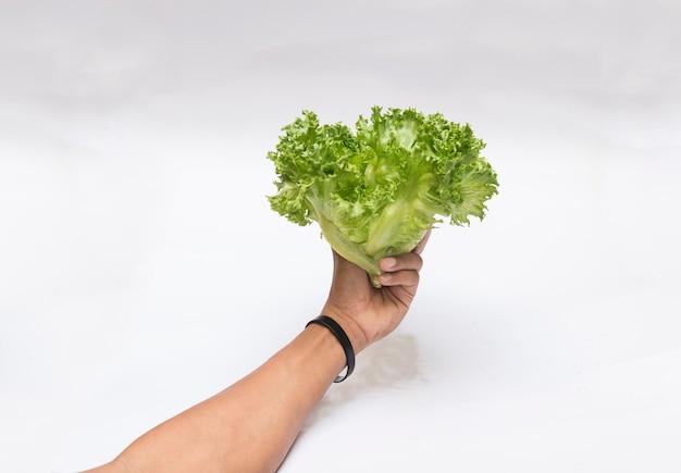 Hidroponia de legumes em garrafa de plástico. Foto Premium