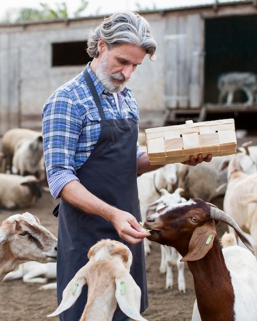 Homem alimentando animais Foto gratuita