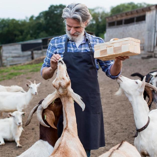 Homem alimentando cabras de frente Foto gratuita