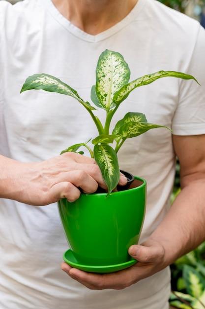 Homem close-up, segurando, flowerpot, com, planta Foto gratuita