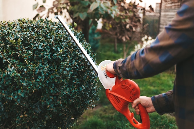 Homem com uma tesoura para arbustos cultiva um arbusto no quintal Foto Premium