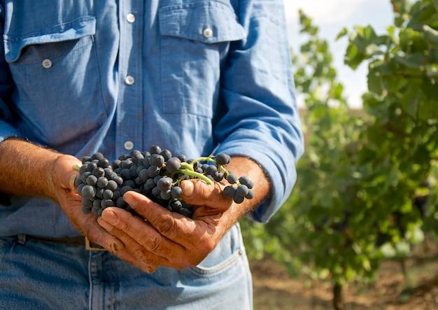 Homem, com, uvas, em, seu, mãos Foto Premium