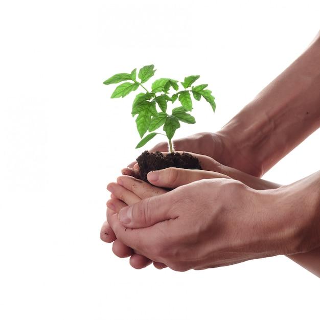 Homem e criança que guardam o solo com plântula do tomate. família, jardinagem e conceito de proteção ambiental. Foto Premium