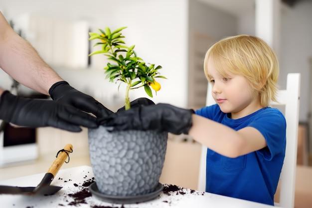 Homem e menino transplantando calamondina de planta de casa para um grande vaso Foto Premium