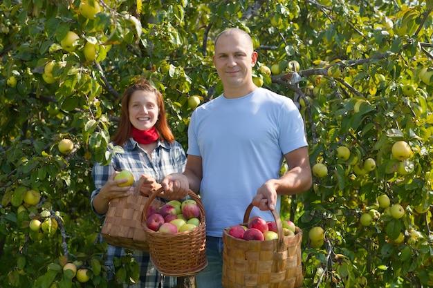 Homem e mulher escolhem maçãs Foto gratuita