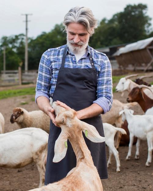 Homem idoso alimentando cabras Foto gratuita