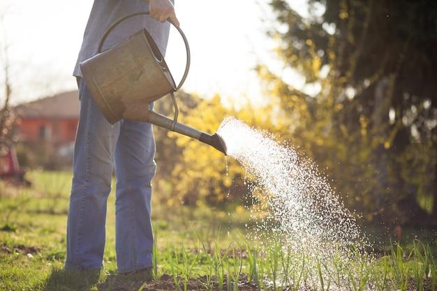 Homem idoso regando seu enorme jardim com uma lata durante a primavera Foto Premium