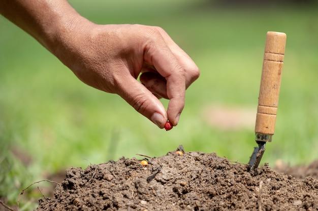 Homem, mão, plantar, semente, solo, salvar, wold, conceito Foto Premium