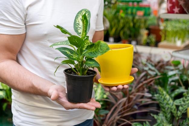 Homem, segurando, planta, e, flowerpot Foto gratuita