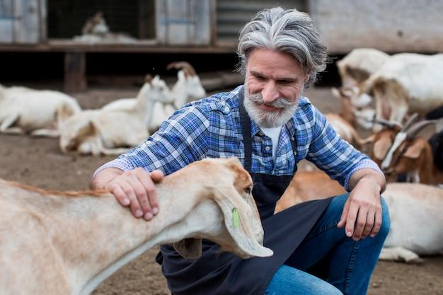 Homem sênior brincando com cabras Foto gratuita