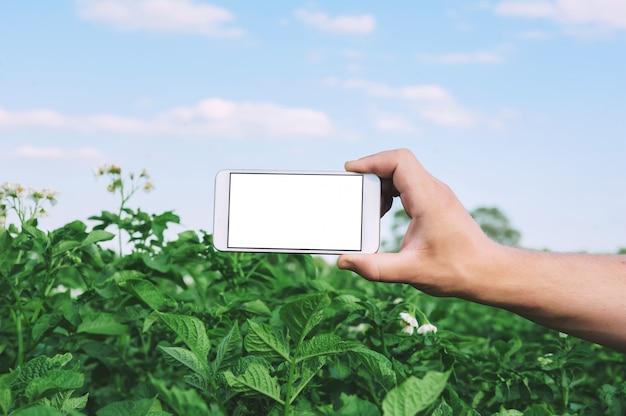 Homem tem um smartphone na mão sobre o campo verde. Foto Premium