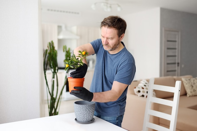 Homem transplantando calamondina de planta de casa para um grande vaso de flores Foto Premium