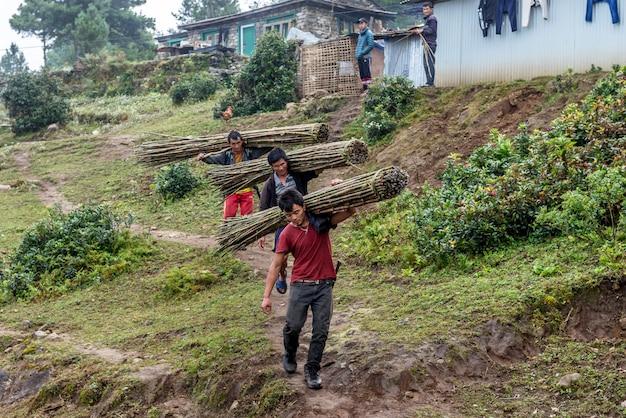 Homens nepaleses carregam quadril de bambu verde enquanto caminhava na aldeia em khumbu, nepal Foto Premium