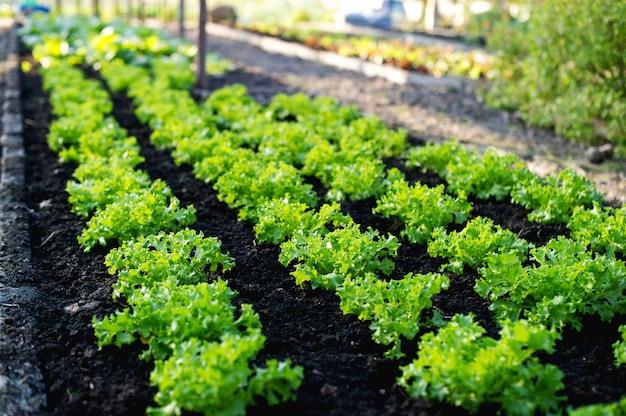 Horta de agricultores Foto Premium