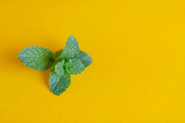 Hortelã-pimenta colocada em um fundo amarelo. Foto gratuita