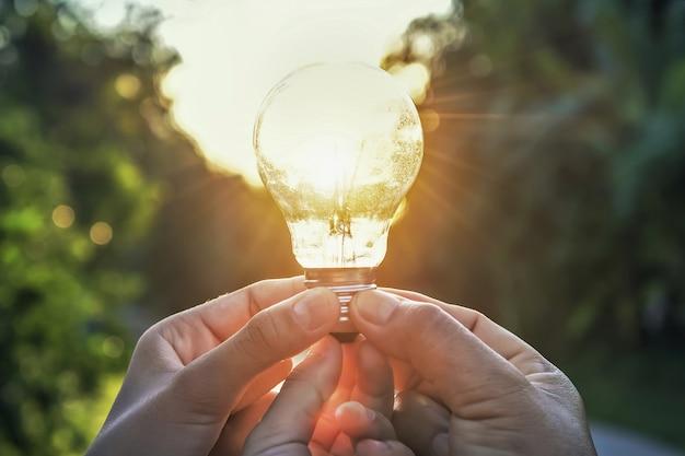 Idéia conceito, energia solar, em, natureza, três mão, segurando, luz, bulbo, e, amanhecer Foto Premium