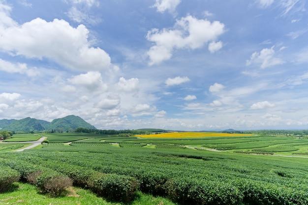 Ideia da paisagem do campo da planta de chá verde. Foto Premium