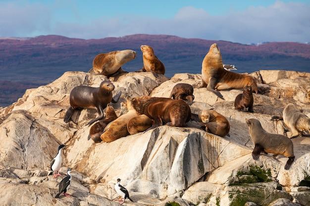 Ilha seal perto de ushuaia Foto Premium
