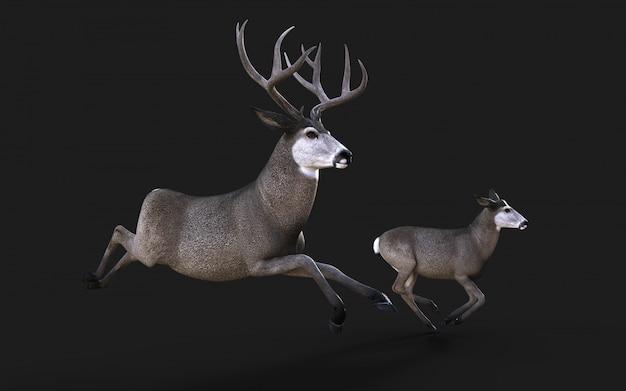 Ilustração 3d de vida selvagem de cervos-mula no oeste americano isolar em fundo preto com traçado de recorte Foto Premium