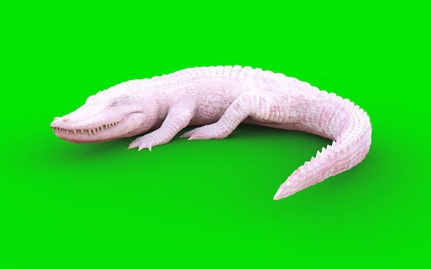 Ilustração 3d do jacaré americano albino isolado no fundo verde ... 023a27f263