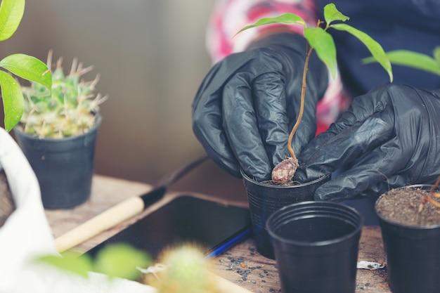 Imagem aproximada da planta de plantio de mãos de jardineiro Foto gratuita