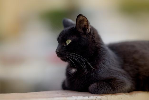 Imagem aproximada de um gato preto deitado calmamente no chão e ignorando completamente a câmera Foto gratuita