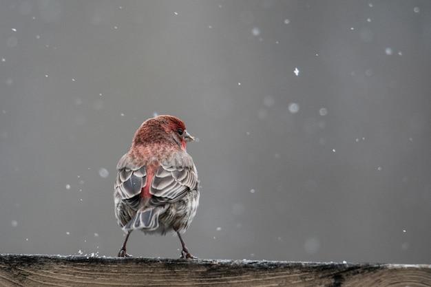 Imagem aproximada de um pássaro vermelho e marrom descansando em uma superfície de madeira durante a neve Foto gratuita