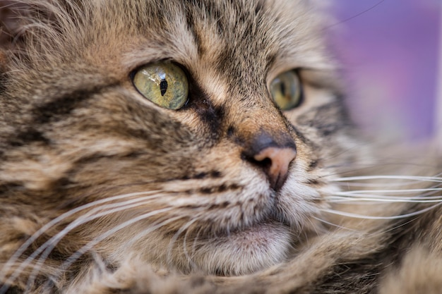 Imagem bonito do gato Foto gratuita