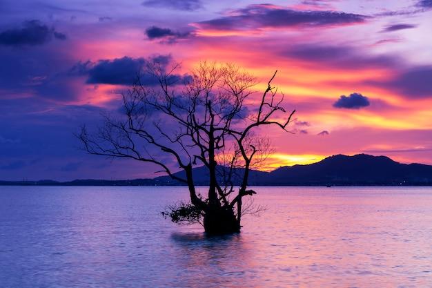 Imagem de longa exposição do dramático pôr do sol ou nascer do sol, céu nuvens sobre a montanha com a árvore sozinha Foto Premium