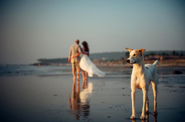 Imagem desfocada do casal feliz andando na praia. em primeiro plano, um cachorro fica na areia. homem e mulher em um abraço são removidos à beira-mar. conceito de férias Foto Premium