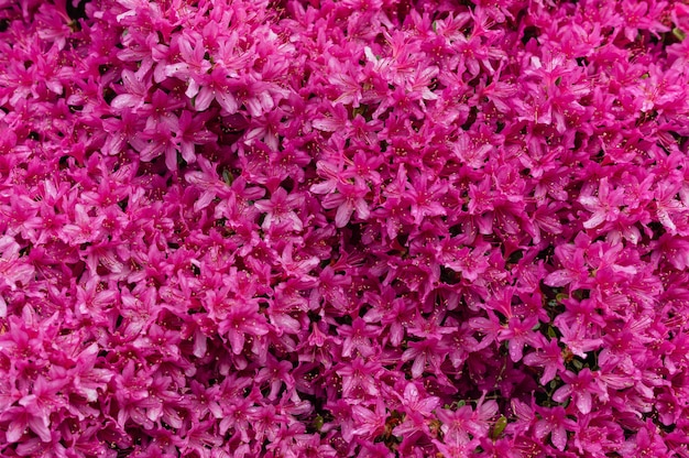 Imagem hipnotizante de flores cor de rosa Foto gratuita