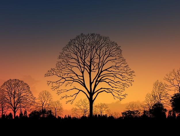 Imagem linda paisagem com silhueta de árvores ao pôr do sol Foto Premium