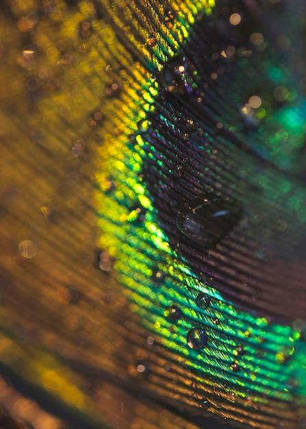 Imagem macro de penas de pavão com gotas de água Foto gratuita