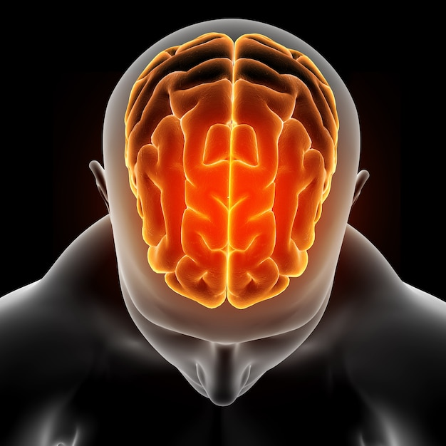 Imagem médica 3d, mostrando a figura masculina com destaque do cérebro Foto gratuita