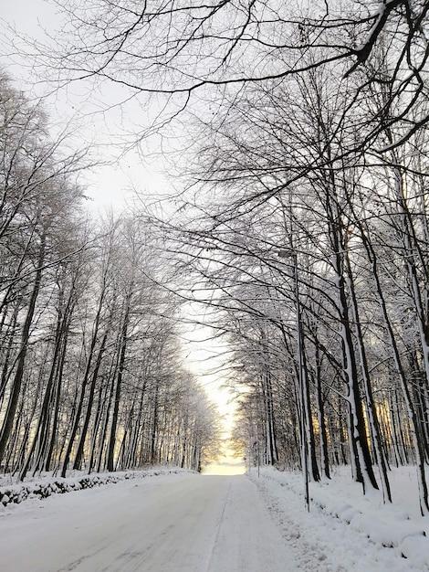 Imagem vertical da estrada cercada por árvores cobertas pela neve sob o sol na noruega Foto gratuita