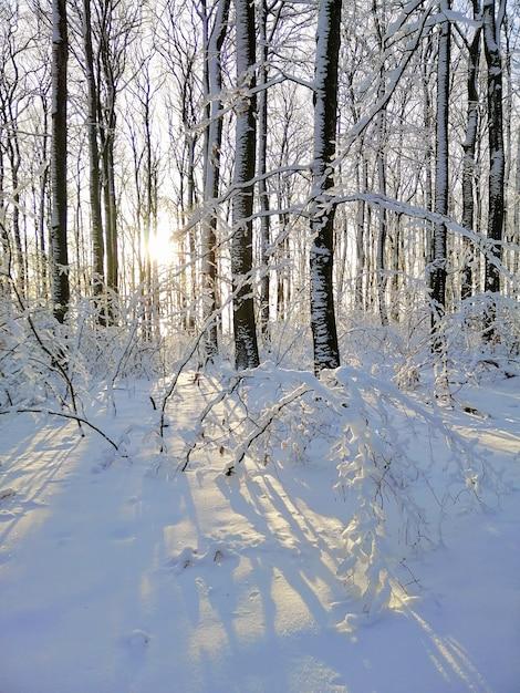 Imagem vertical de árvores cobertas de neve na floresta sob a luz do sol em larvik, na noruega Foto gratuita