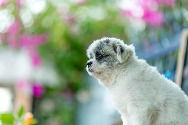 Imagens de cachorro branco, foto bonito, conceito de cão de amor Foto Premium